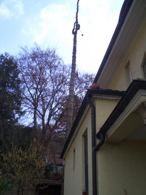 Landschaftsgärtner Tübingen christopher stemmler