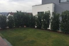 Pflanzen121