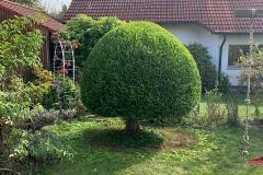 Pflanzen190